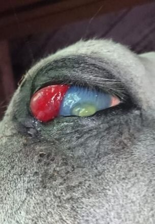 ожог борщевик глаз
