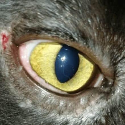 кошка глаз операция