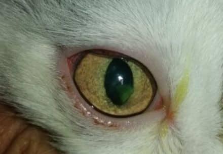 кошка травма когтём