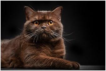 вылечить проблемы глаз у кошки