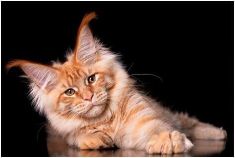 вылечить глаз кошки дома